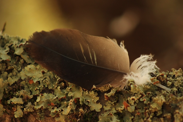 bird-feather-in-autumn
