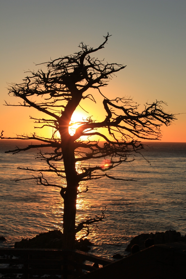 Sunset over the ocean on the 17-mile drive in Carmel-by-the-Sea. A must see place!