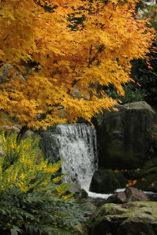 kyoto-garden-holland-park-london