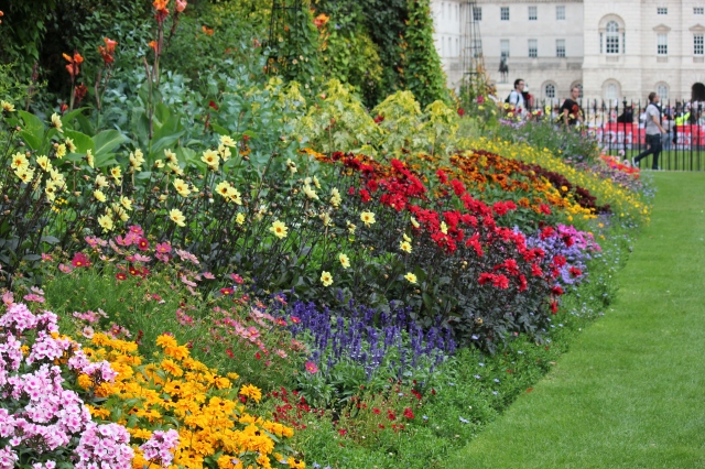 St. James's Park is very colorful at the moment!